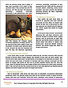 0000075519 Word Template - Page 4