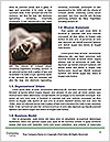 0000075538 Word Template - Page 4