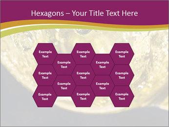 0000075558 PowerPoint Template - Slide 44