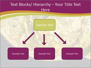 0000075558 PowerPoint Template - Slide 69