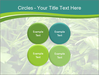 0000075618 PowerPoint Templates - Slide 38