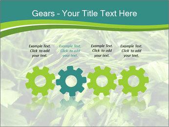 0000075618 PowerPoint Template - Slide 48