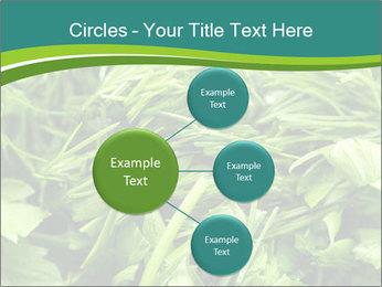 0000075618 PowerPoint Template - Slide 79