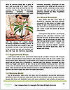 0000075700 Word Template - Page 4