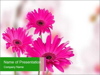0000075835 PowerPoint Templates - Slide 1