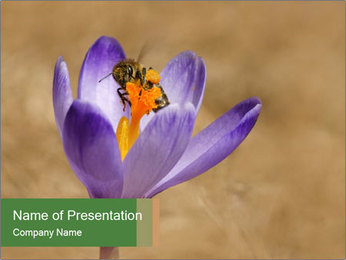 0000076017 PowerPoint Template - Slide 1
