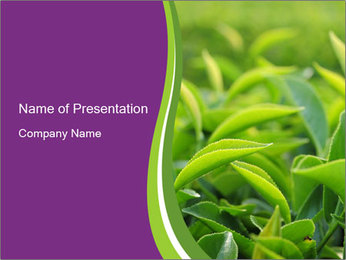 0000076245 PowerPoint Template - Slide 1