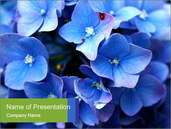 0000076299 PowerPoint Template - Slide 1