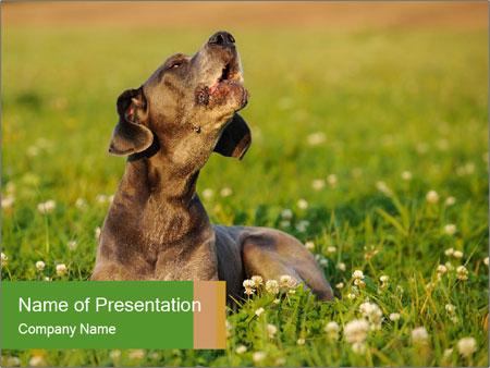 0000076354 PowerPoint Templates