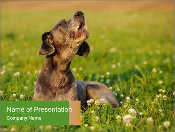 0000076354 PowerPoint Templates - Slide 1