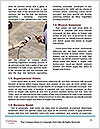 0000076552 Word Templates - Page 4