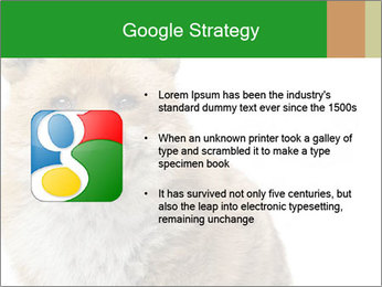 0000076565 PowerPoint Templates - Slide 10