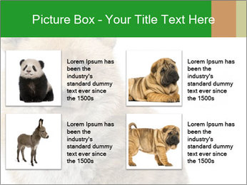 0000076565 PowerPoint Template - Slide 14