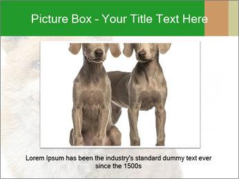 0000076565 PowerPoint Templates - Slide 16
