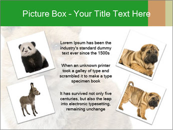0000076565 PowerPoint Template - Slide 24