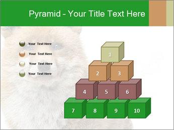 0000076565 PowerPoint Templates - Slide 31