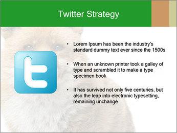 0000076565 PowerPoint Templates - Slide 9