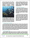 0000076580 Word Template - Page 4
