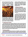 0000076599 Word Template - Page 4