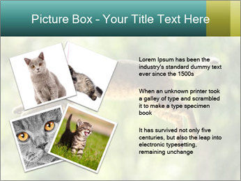 0000076715 PowerPoint Template - Slide 23