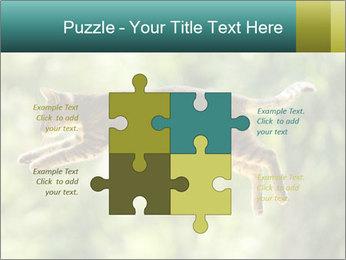 0000076715 PowerPoint Template - Slide 43