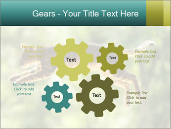 0000076715 PowerPoint Template - Slide 47