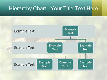 0000076715 PowerPoint Template - Slide 67