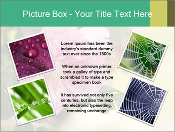 0000076733 PowerPoint Template - Slide 24