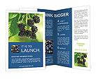0000076769 Brochure Templates