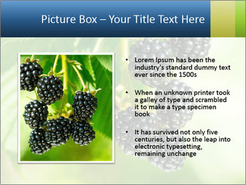0000076769 PowerPoint Template - Slide 13