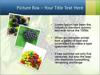 0000076769 PowerPoint Template - Slide 17