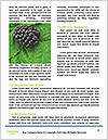 0000076769 Word Templates - Page 4