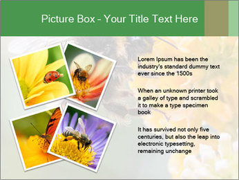 0000076783 PowerPoint Template - Slide 23