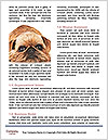 0000076791 Word Template - Page 4