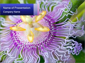 0000076855 PowerPoint Templates - Slide 1