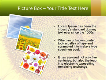 0000076867 PowerPoint Template - Slide 17