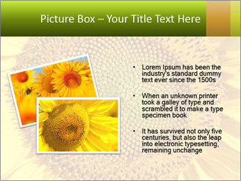 0000076867 PowerPoint Template - Slide 20