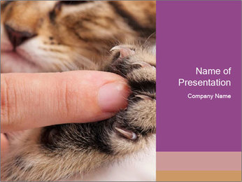 0000076888 PowerPoint Template - Slide 1