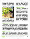 0000076901 Word Template - Page 4
