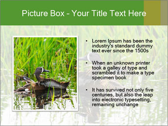 0000076953 PowerPoint Template - Slide 13