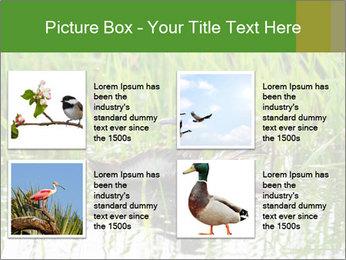 0000076953 PowerPoint Template - Slide 14