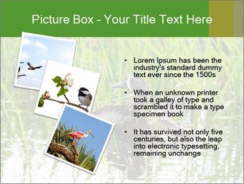 0000076953 PowerPoint Template - Slide 17