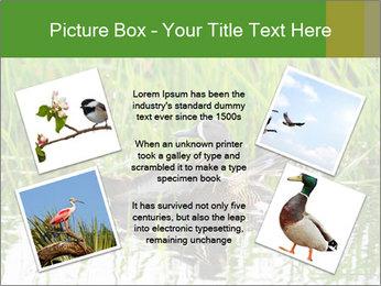 0000076953 PowerPoint Template - Slide 24