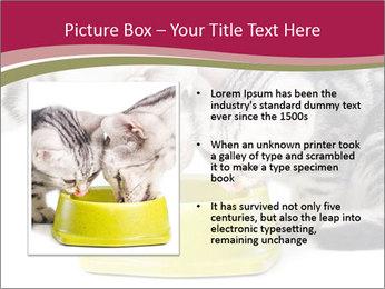 0000076965 PowerPoint Templates - Slide 13