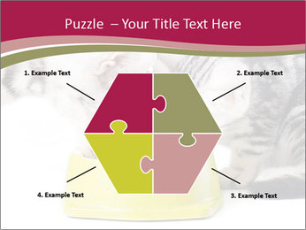 0000076965 PowerPoint Templates - Slide 40
