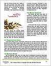 0000076968 Word Template - Page 4