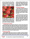 0000077027 Word Template - Page 4