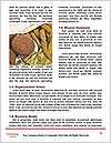 0000077060 Word Template - Page 4
