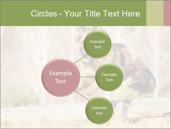 0000077061 PowerPoint Templates - Slide 79