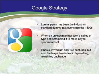 0000077075 PowerPoint Template - Slide 10